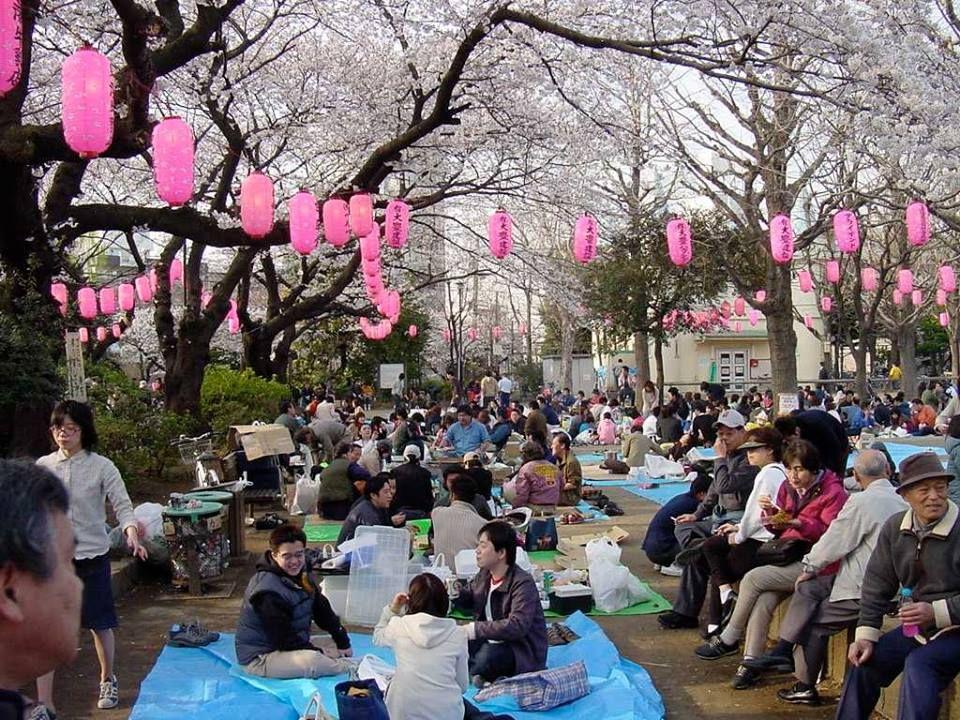 Hanami Japan Hanami Cherry Blossom Festival Japanese Festival