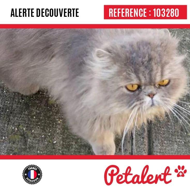 19.11.2016 / Chat / Flines-lez-Raches / Nord / France