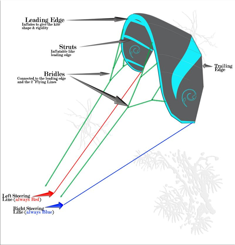 Image result for kite surfing kite parts