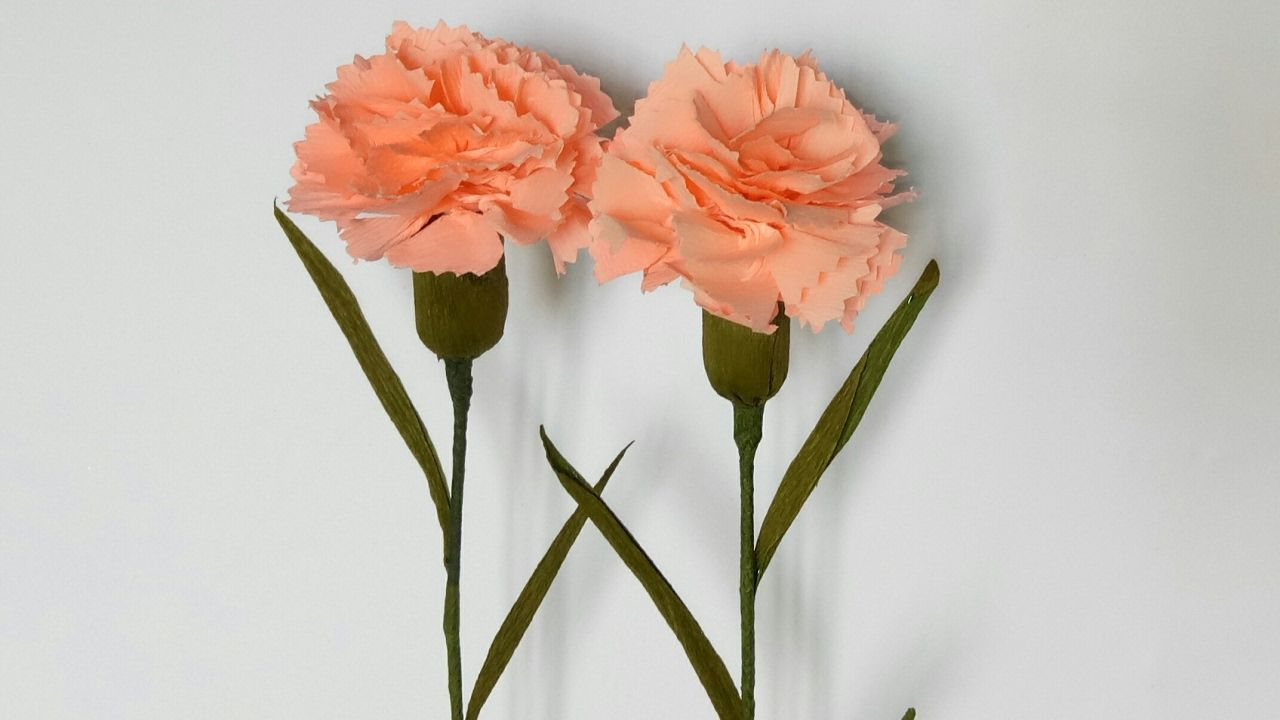 How To Make Carnation Flower From Crepe Paper Carnation Flower Paper Flowers Carnations