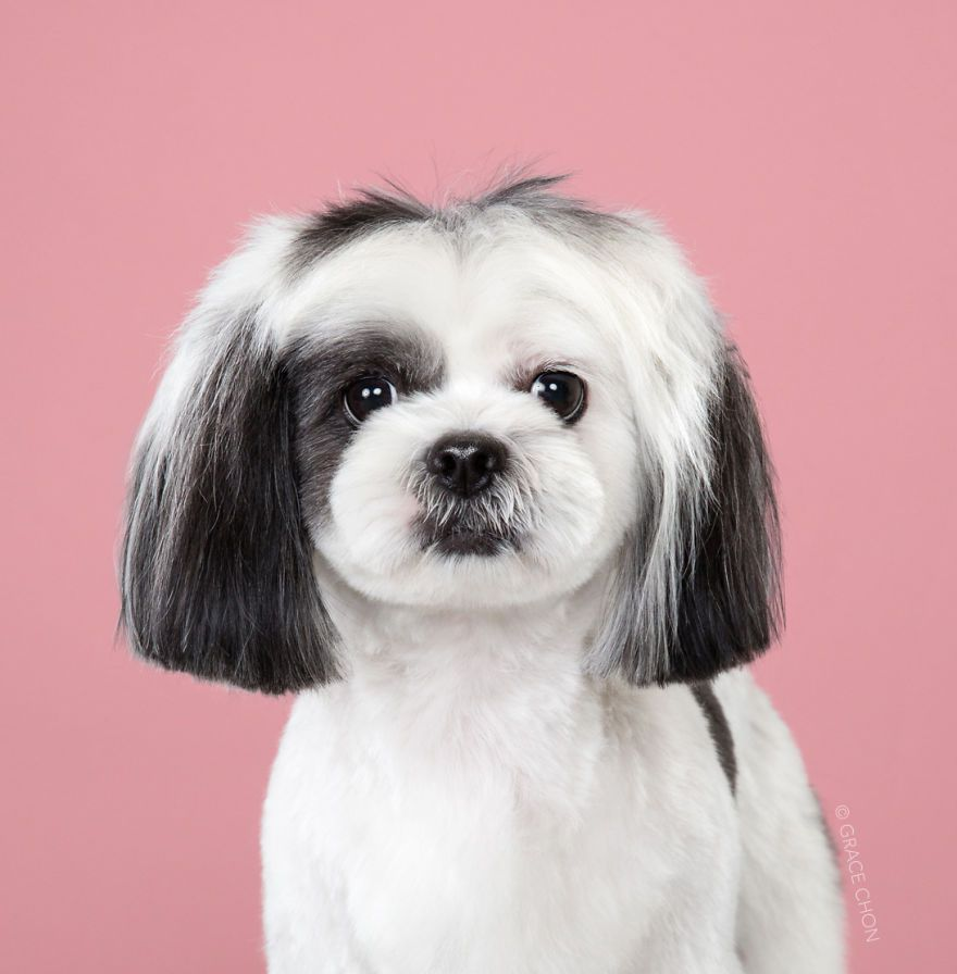 7 Dogs Before And After Japanese Grooming New Pics Japanese