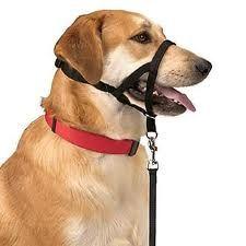 Tipos De Collares De Castigo Para Perros Pin De Yara Santcast En Silla Para Perros En 2020 Bozal Perro