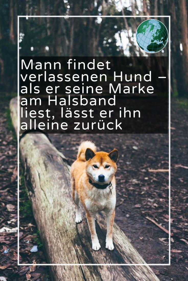 Mann Findet Entlaufenen Hund Dann Sieht Er Die Nachricht Auf Dem Halsband Video Fuchs Haustier Hunde Susse Tiere