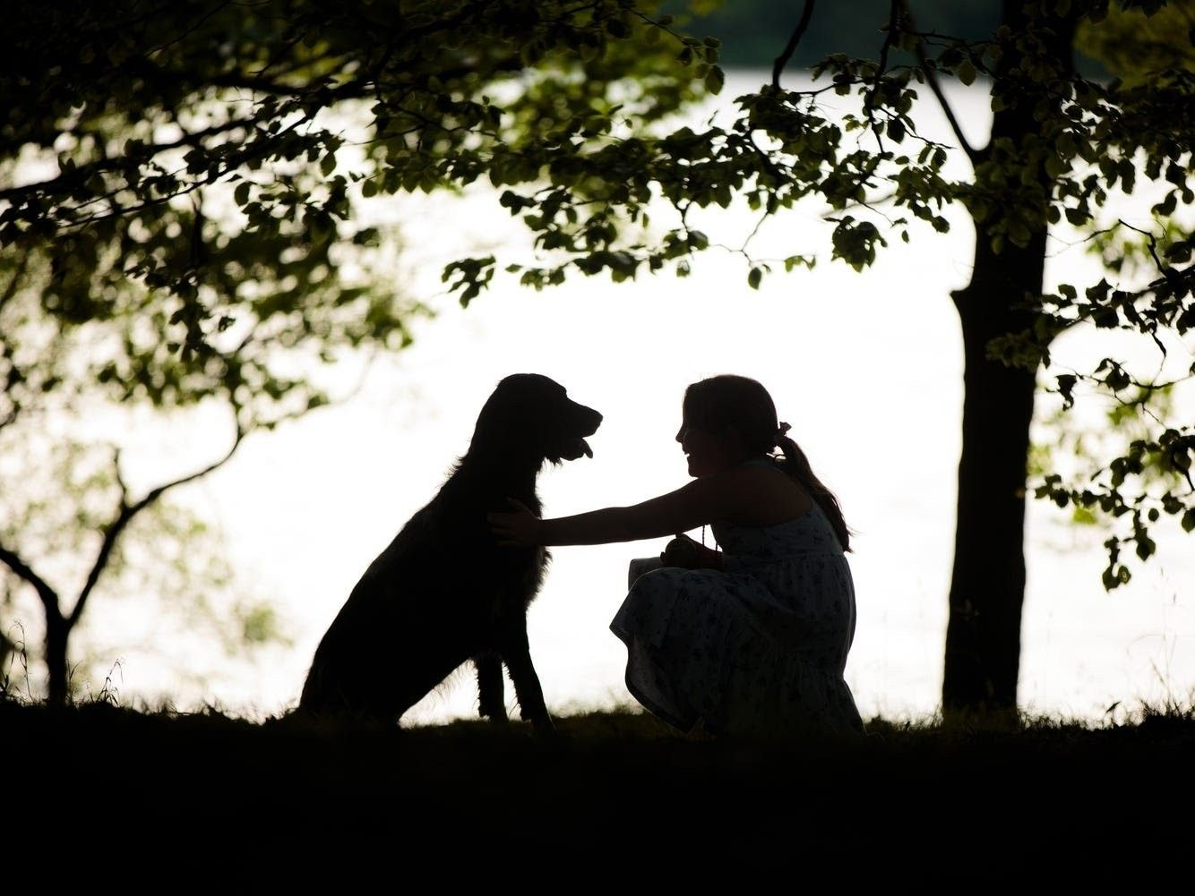 Pin by Steve Priley on what i love Dog photograph, Dog
