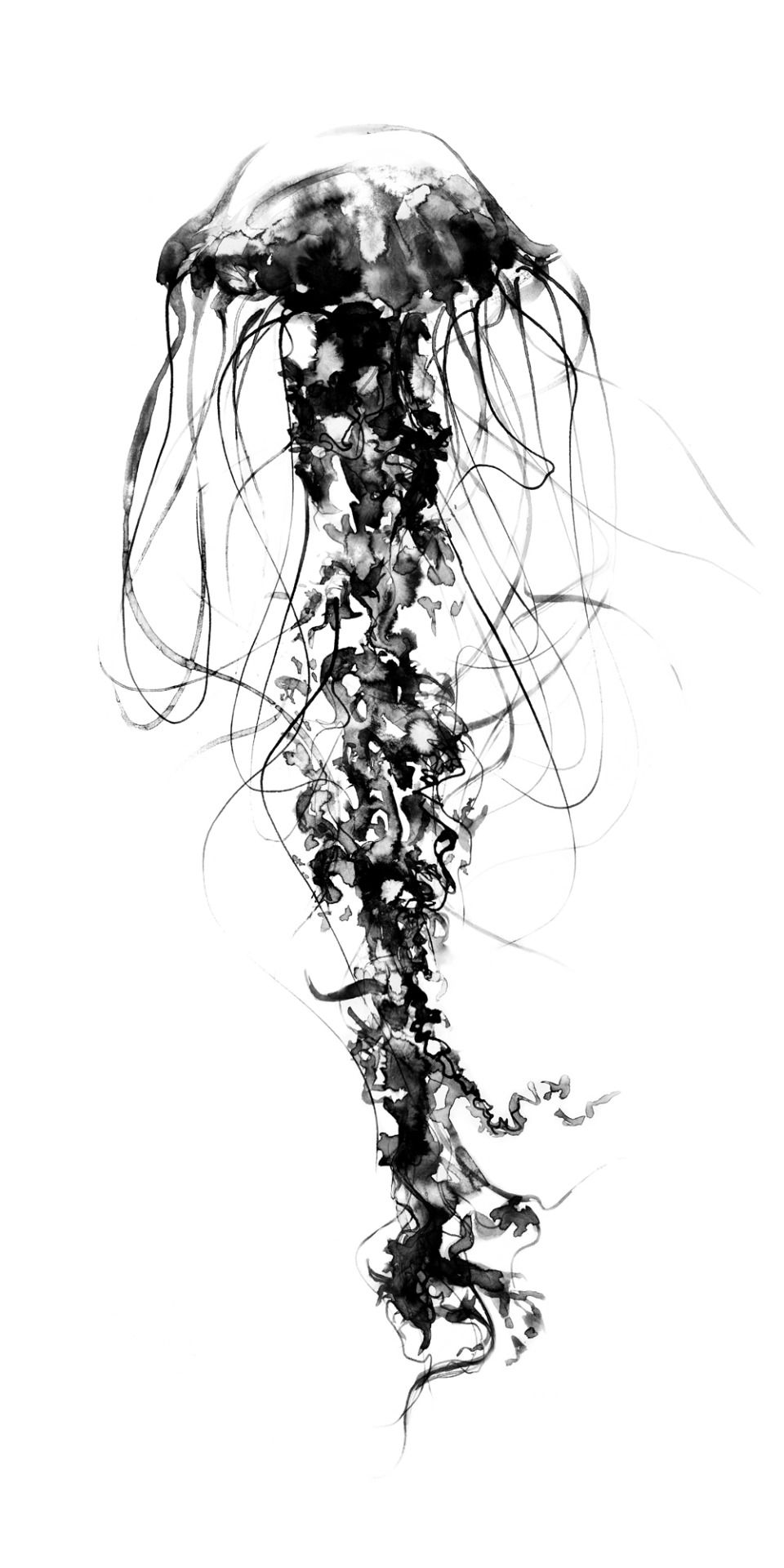 It's just a photo of Declarative Jellyfish Ink Drawing