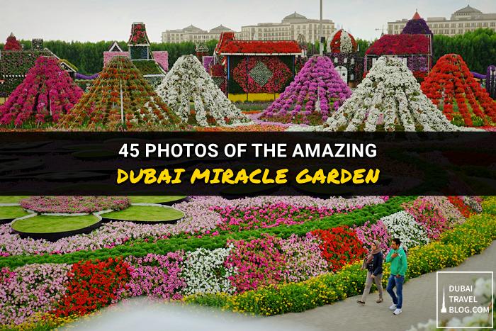 45 Photos of the Amazing Dubai Miracle Garden Miracle