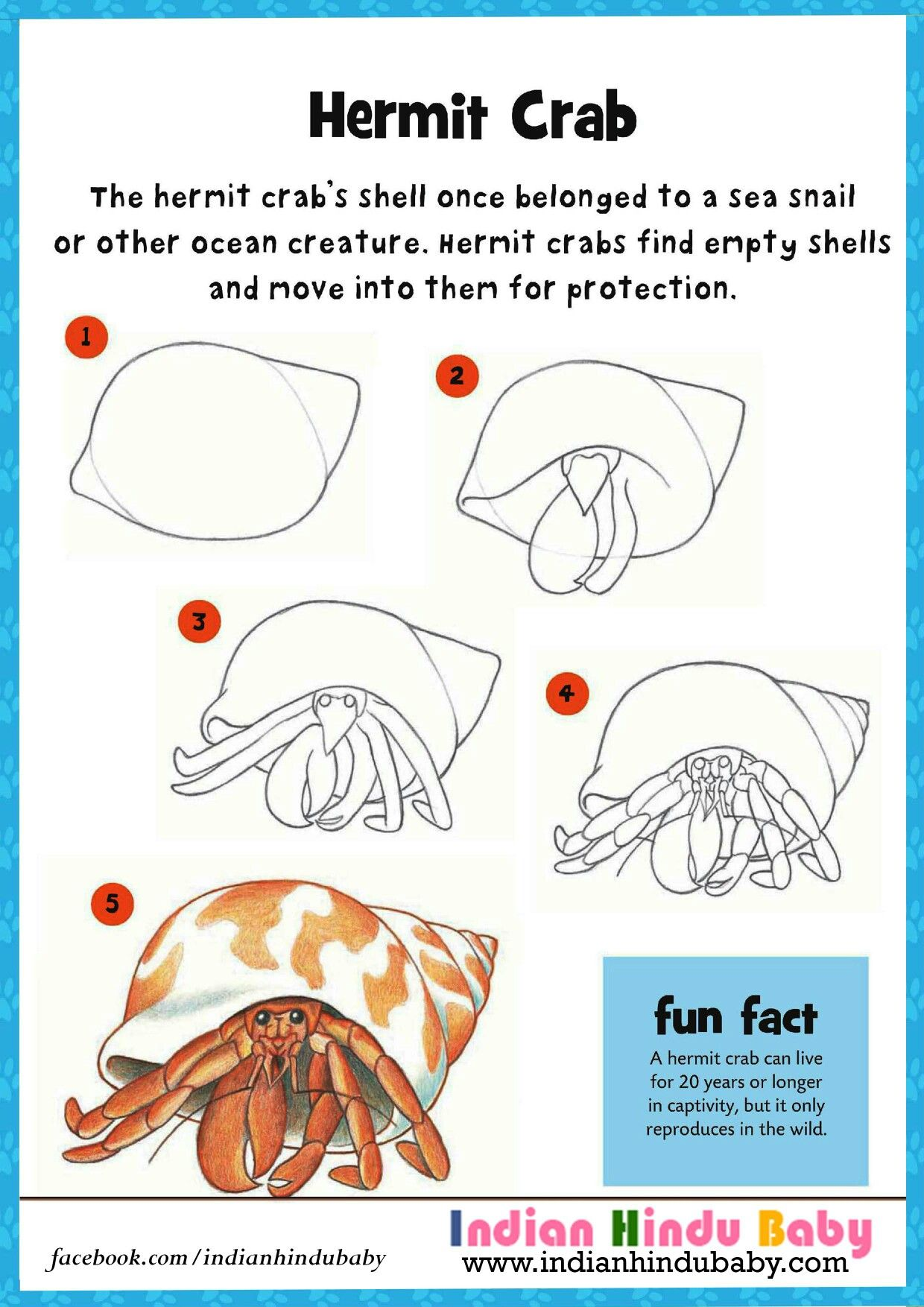 Hermit Crabs Facts For Kids