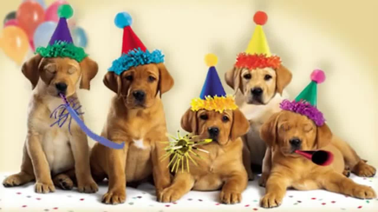 American Greetings It S A Dog Gone Good Birthday Vlipsy Com Happy Birthday Dog Dog Barking Cat And Dog Videos