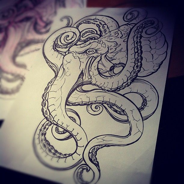 Image result for realistic octopus drawing Art Pinterest