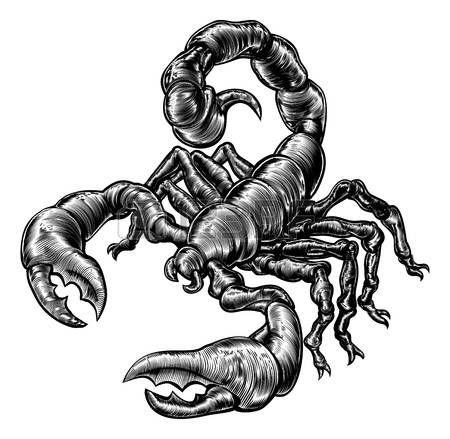 Dessin D Un Scorpion dessin scorpion: une illustration originale d'un scorpion dans un