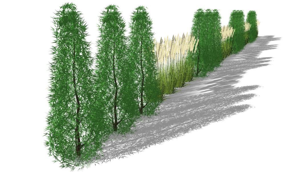 Sichtschutzkombinationen Teil 2 Säulembäume und