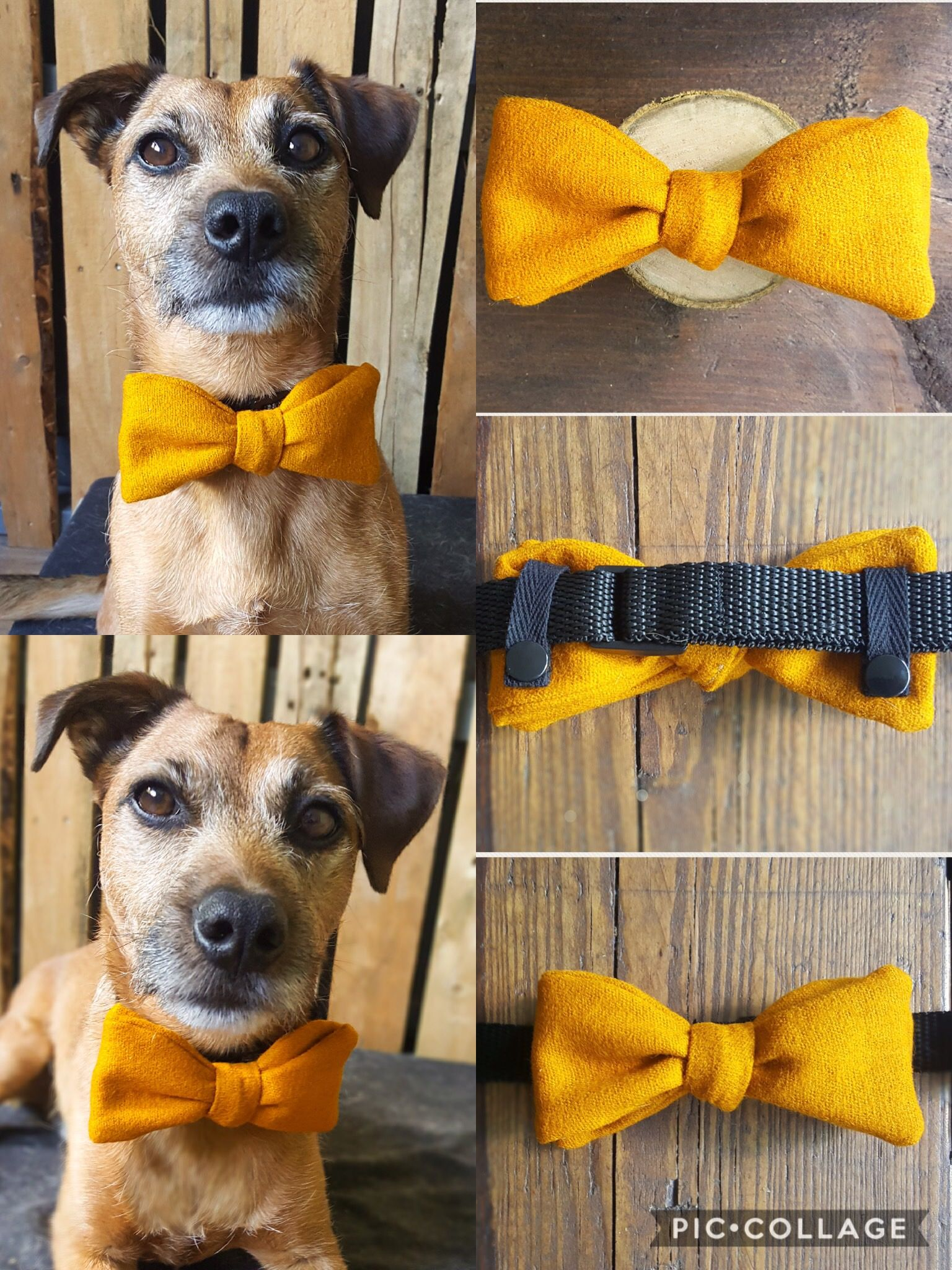 Great Collar Bow Adorable Dog - ac3131ded196d0e6235a526b0c4dd473  2018_605782  .jpg