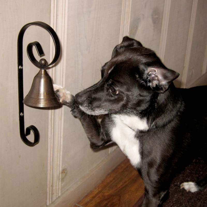 Teach Dog to Ring Bell - This really does work! We taught August this. While they are a puppy when letting them outside to go potty be consistent in ringing the bell before you open the door to let them out. They will then catch on quick that is how they get to go. Be for-warned though the older they get they will consistently ring the bell not only to go potty but just to go outside and play.
