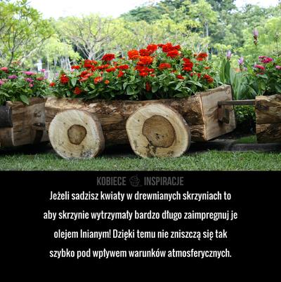 Jezeli Sadzisz Kwiaty W Drewnianych Skrzyniach To Aby Skrzynie Wytrzymaly Bardzo Dlugo Zaimpregnuj Je Olejem Lnianym Dzieki Temu Nie Zni Garden Crafts Texture