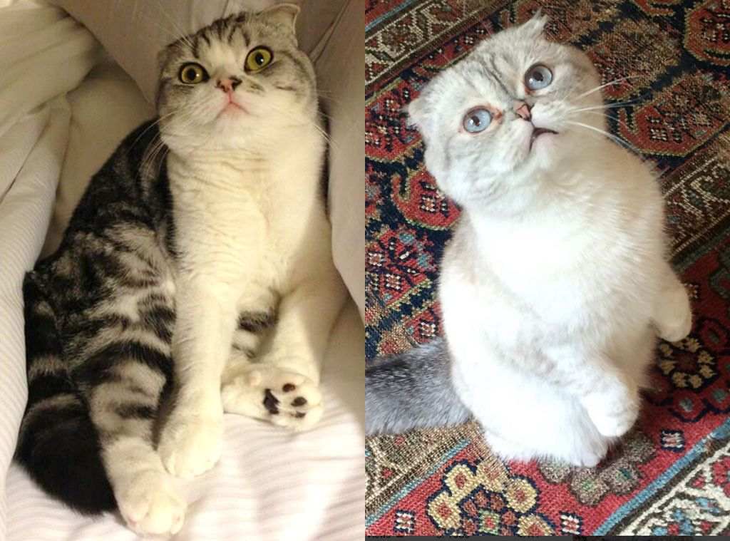What Your Favorite Taylor Swift Cat Says About You