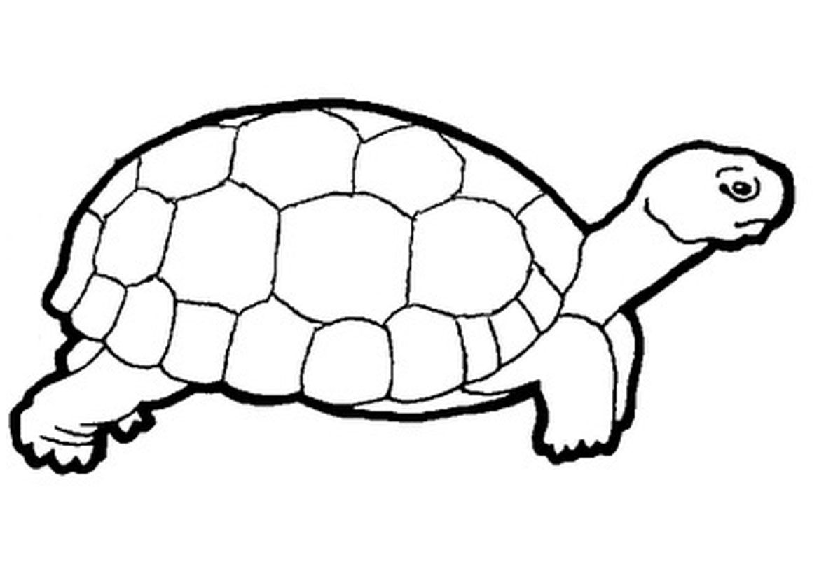 And Art Yertle Turtle White Black Clip