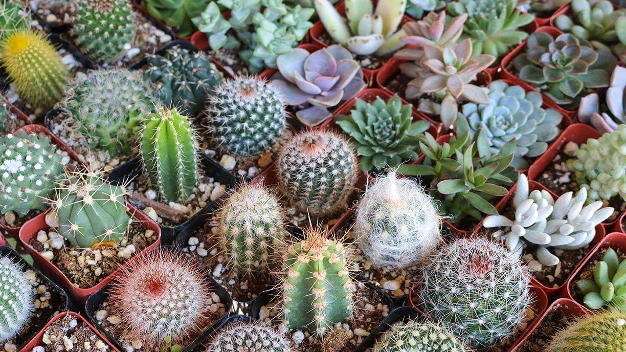 фото кактусов начинающему нужно идти фотосалон