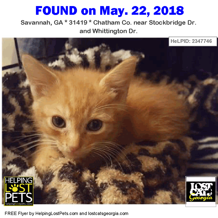 Found Cat Savannah Ga May 22 2018 Closest Intersection Stockbridge Dr Whittington Dr County Chatham Do You Kno Found Cat Savannah Chat Losing A Pet