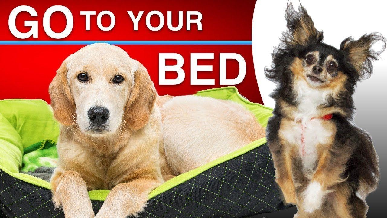Pin By Pet Loverz World On Pet Funniez Dog Training Dog