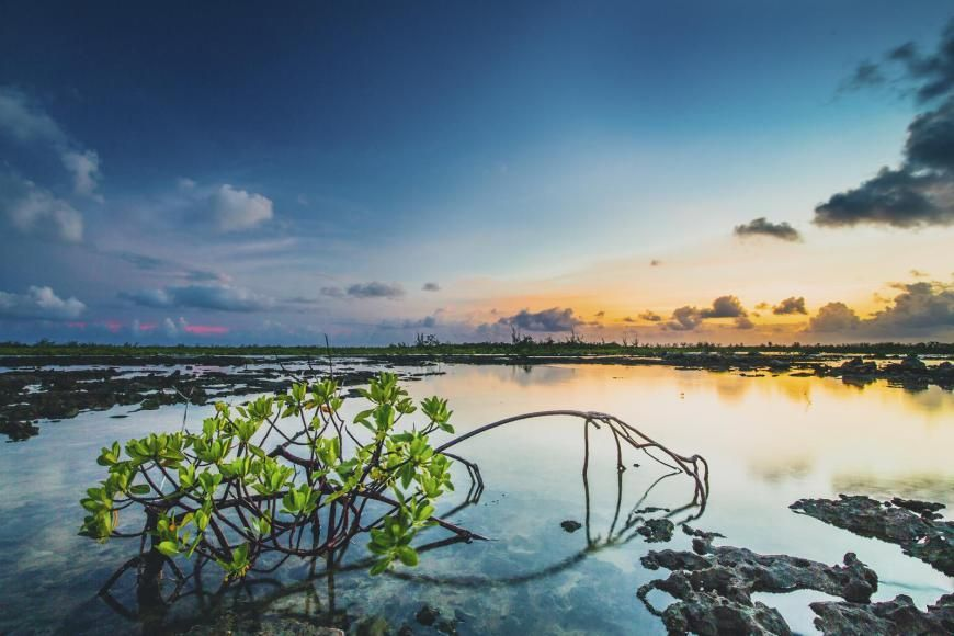 Pin By Laura Haugen On Mangroves Marshes Mangrove Mangrove Forest Island Beach