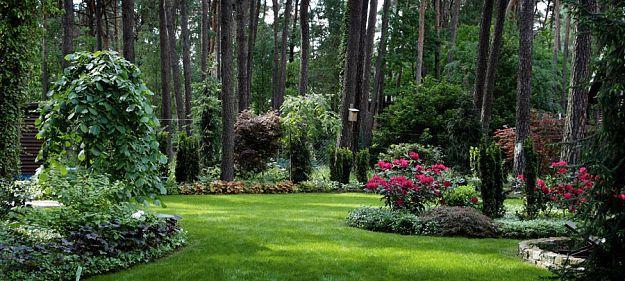 Lesny Ogrod Outdoor Gardens Dream Garden Woodland Garden