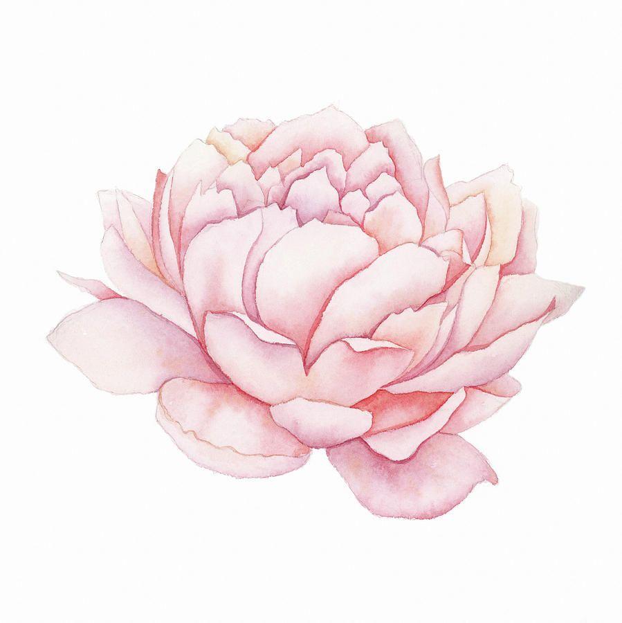 Peony Watercolor Flower Tattoos: Peony Painting, Peony Flower