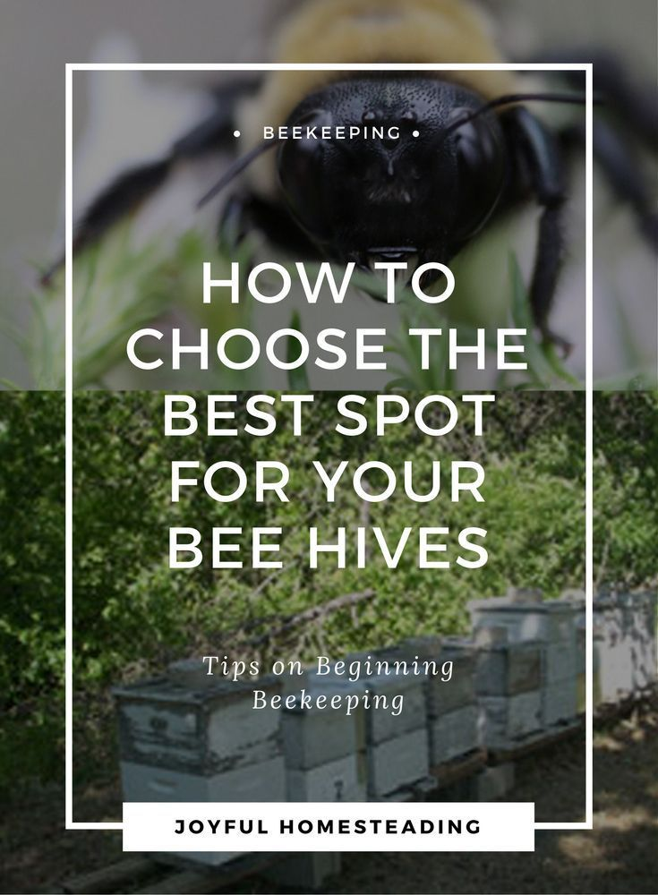 Beekeeping Beginners Will Need To Find The Best Possible Beehive Location.