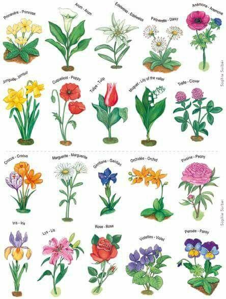 Flores Pretty Flower Names Flower Names Pretty Flowers