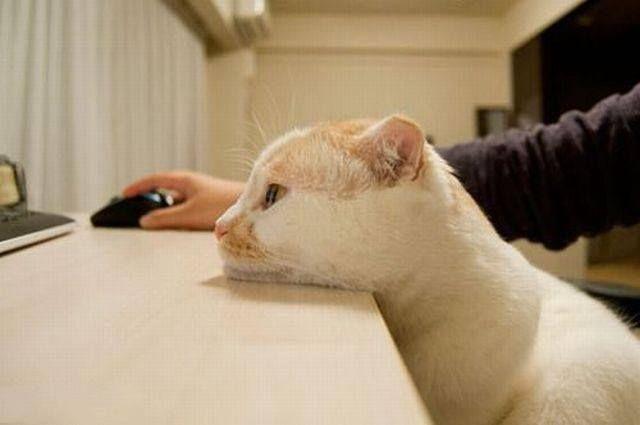 komputer, czy nie - ale tej myszy trzeba pilnować!
