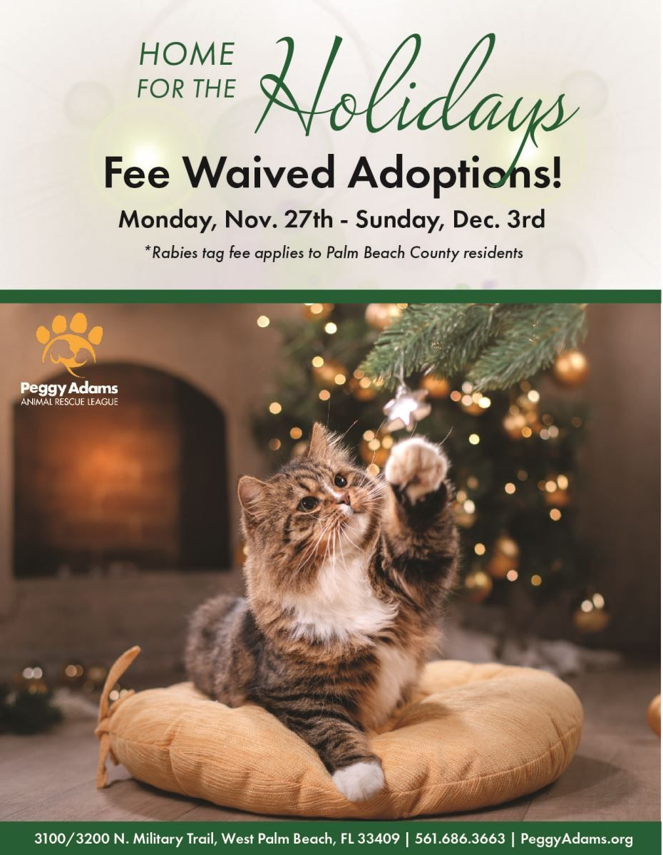 Adopt A Friend Peggy Adams Animal Rescue League Animal Rescue Animals