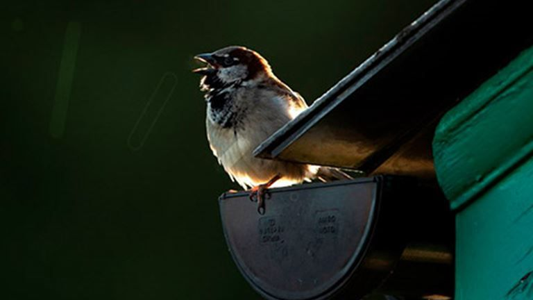 Enjoy listening to bird song anytime anywhere with