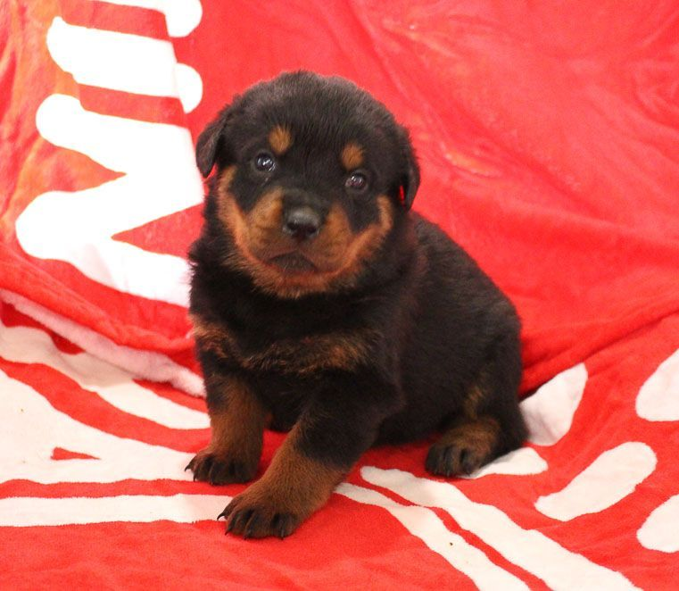Cute Puppies For Sale Girls Cutecats Cutecouples Cutegirls