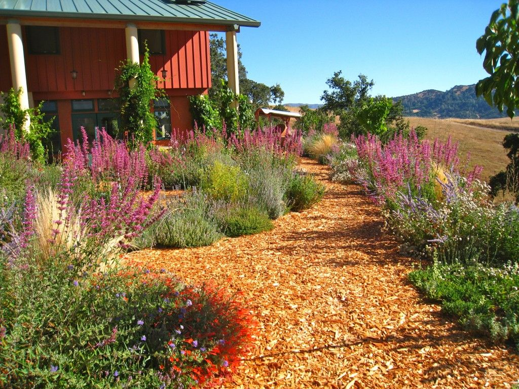 California drought resistant garden, hummingbird heaven ...