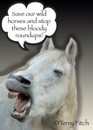 mailto:info@ - A HORSE SLAUGHTERHOUSE is slated to open in Roswell, NM