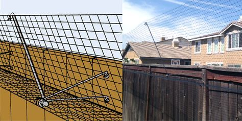 Outdoor Cat Fence Really Works Cat Fence Outdoor Cats
