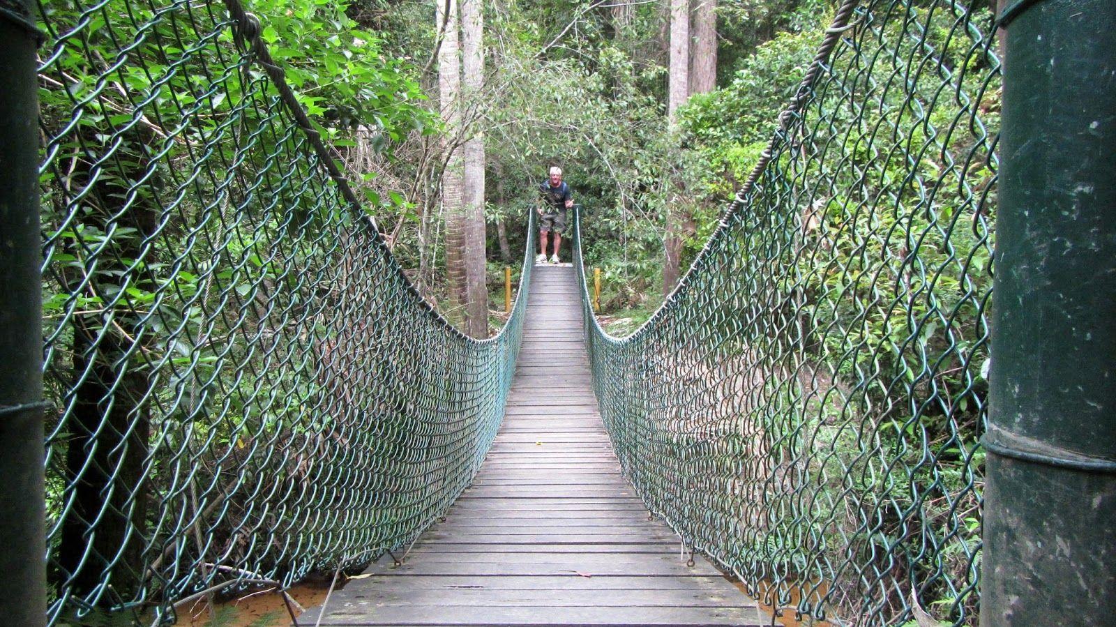 Strickland State Forest Nsw Finalist Australian Tourism Awards