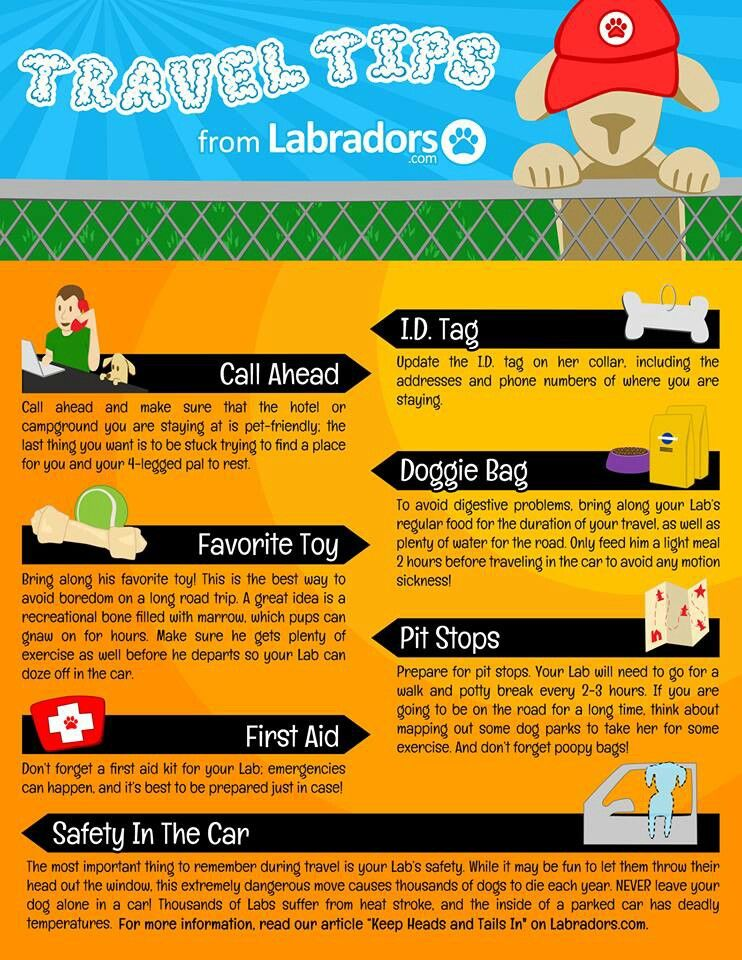 Pet travel guide Dog travel, Pet travel, Summer travel