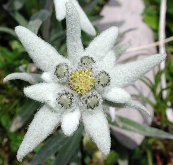Pin En Plantas Variedad De Flores