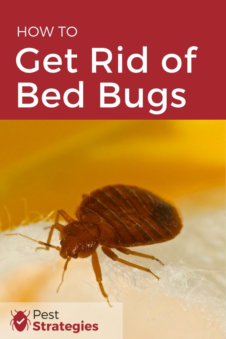 Tips on how to get rid of bedbugs yourself
