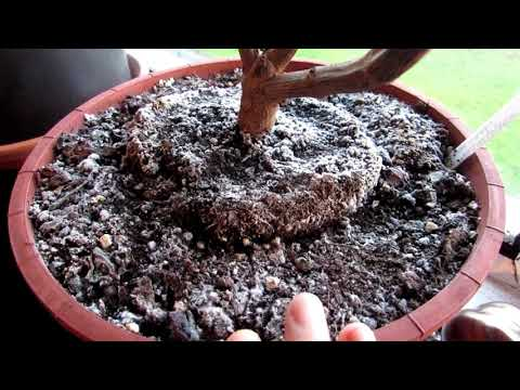 White Mold On Top Of Soil On Houseplants And Is It Harmful Youtube Houseplants Indoor Plants Low Light Soil