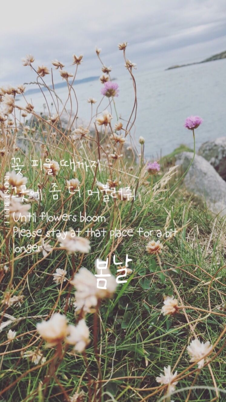 Spring Day Wallpaper Lyrics BTS made entirely by R O S E B