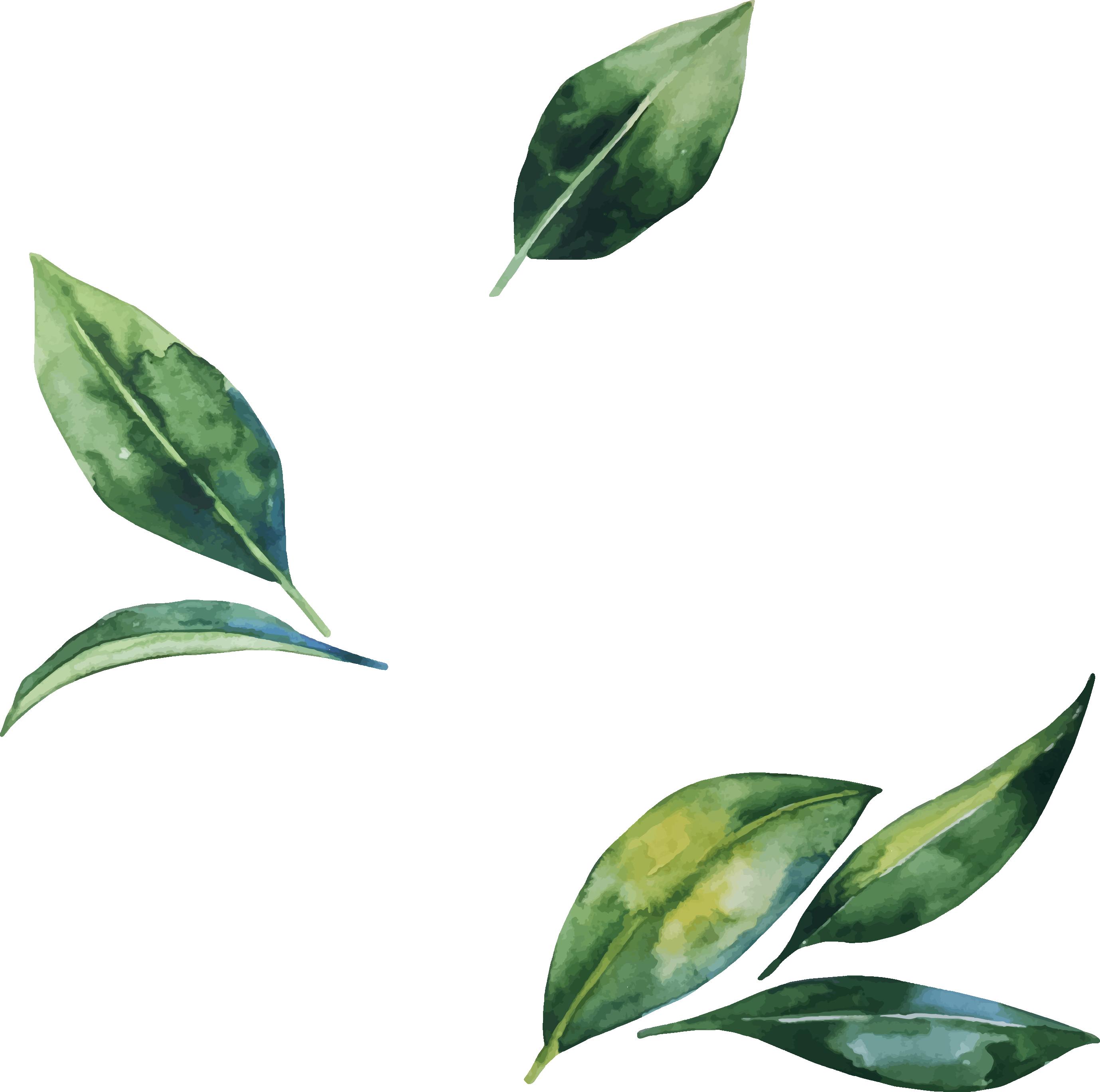 Flower Leaf Leaves Illustration Watercolor Hand Painted Leaves Illustration Banana Leaves Watercolor Watercolor Leaves