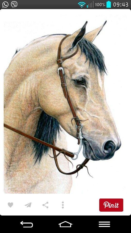 pin von silke philipps auf tiere malen in 2020  pferde