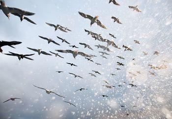 Salt Birds