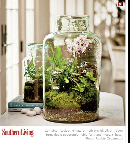 Www Southernliving Com Terrerium Orchid Gartenterrarium Flaschengarten Miniaturgarten