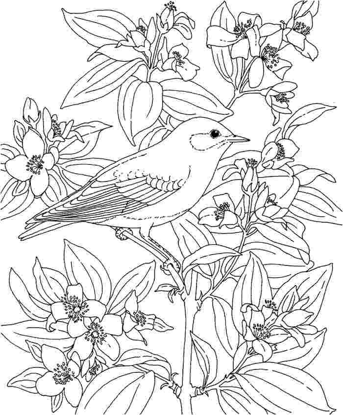 ytka6jgtejpg 700846 coloring pageshawaii - Hawaii Coloring Book