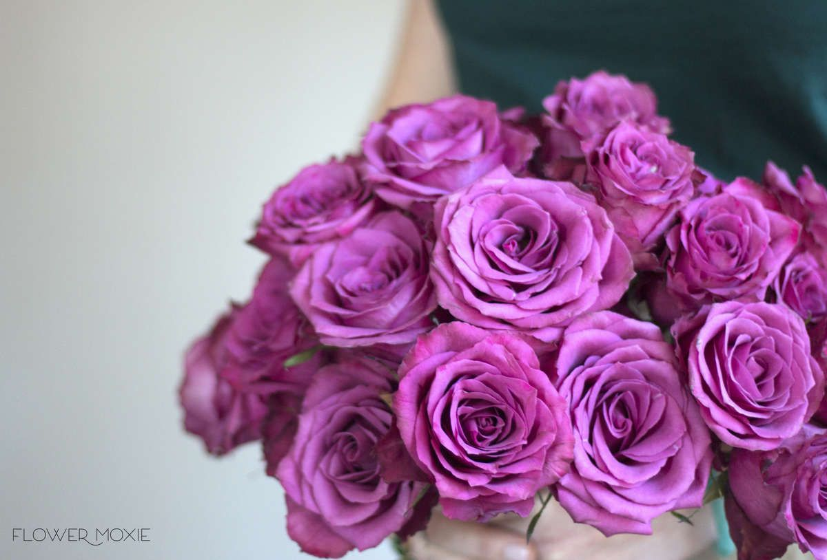 Blueberry Roses  Standard roses DIY wedding and Bouquet flowers