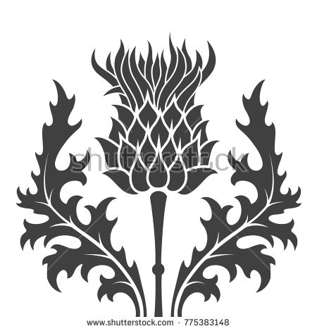 Flat Monochrome Silhouette Thistle Symbol Of Scotland Over White