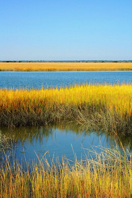 Marsh Usa Places To Visit And Stay South Carolina