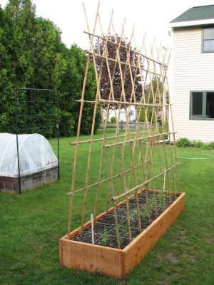 Structure for growing peas with raised bed. Doesn't need ...